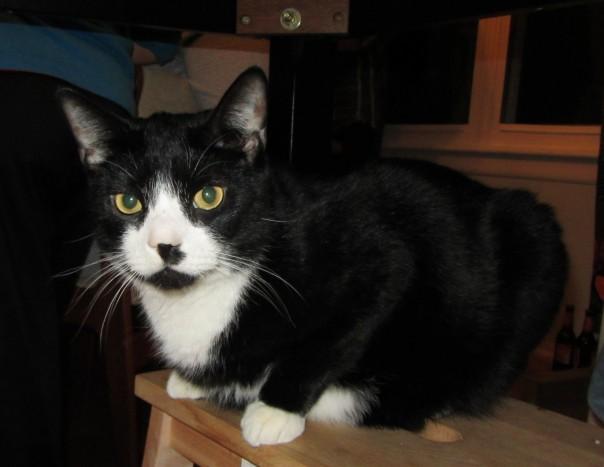 Lafayette the Cat - Blog Mascot